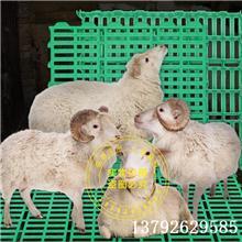 塑料羊床 塑料羊地板 奶山羊用塑料地板