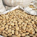 人工水系铺设鹅卵石供应商/张家口钢厂鹅卵石价格