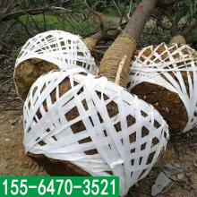 土球无纺布批发厂家