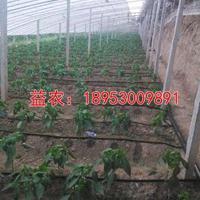 温室大棚蔬菜滴灌设计安装价格表