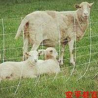 百瑞优质牛栏网 质量认证牛羊养殖网 60年寿命草原网 价格优惠