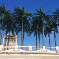 浙江台州仿真植物制作工厂,江南园艺仿真树,大王椰子树施工安装