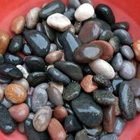 厂家直销 鹅卵石 抛光鹅卵石 天然五彩石 雨花石 砾石