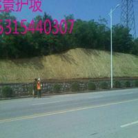 浙江舟山厂家大量生产环保草毯,高速公路边坡护坡材料,价格优惠
