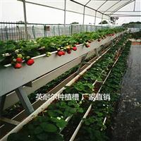 供应大棚草莓立体种植槽 PVC番茄椰糠槽 瓜果蔬菜栽培槽