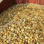 韩城米黄色变压器油池专用鹅卵石输电工程专用